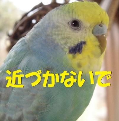 CIMG7783.jpg