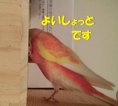 CIMG7791.jpg