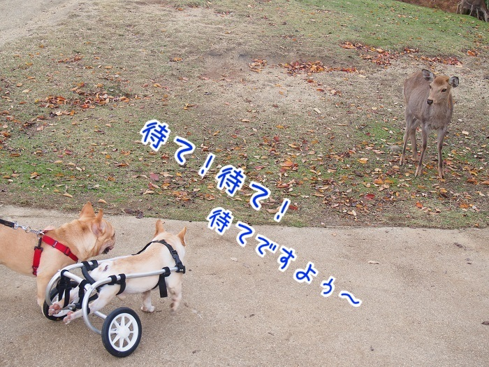 若草山4③
