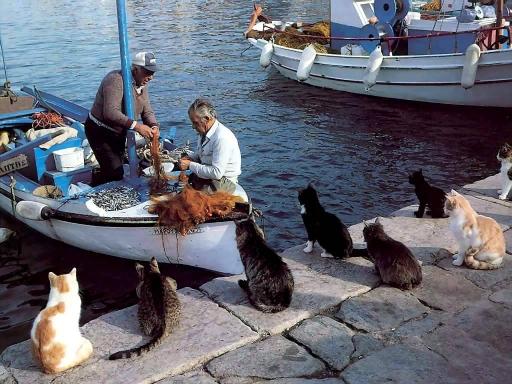 漁師のおこぼれを狙う猫たち