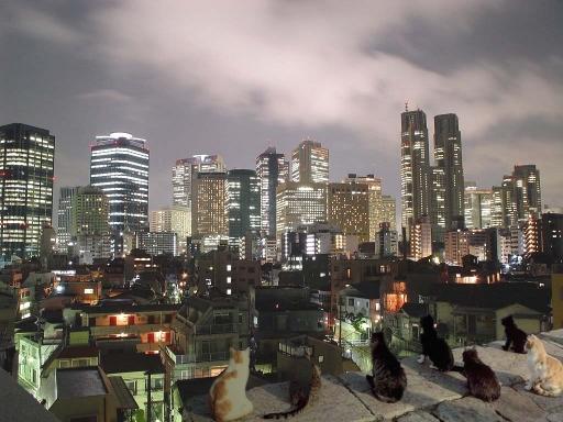 都会チックな夜景に集まる猫たち
