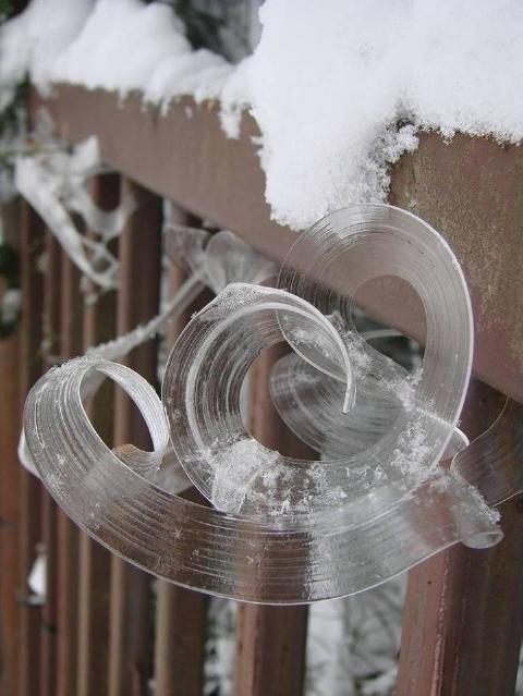 くるくるとカールした霜が美しいフロスト・フラワー