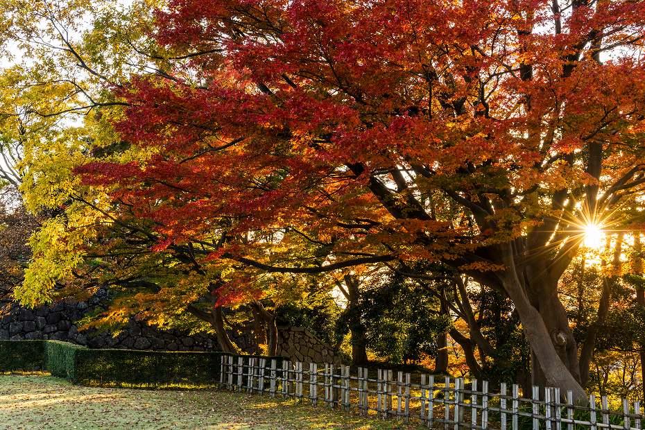 2016.11.18金沢城公園9