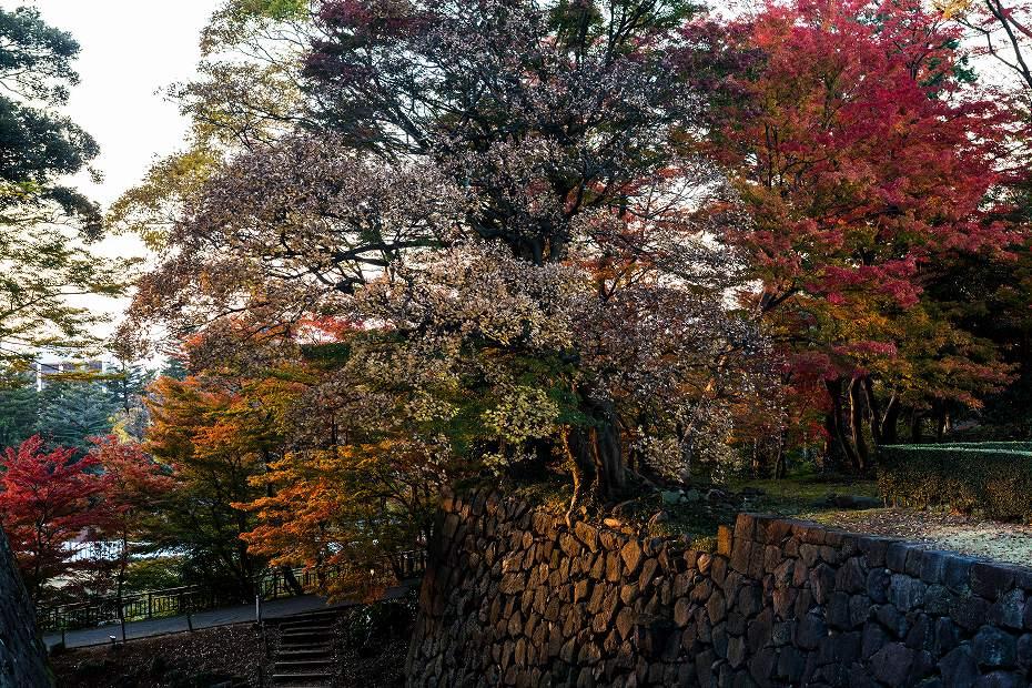 2016.11.18金沢城公園11