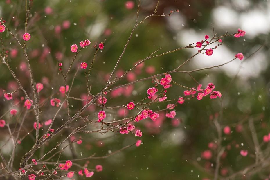 2017.01.15兼六園の朝景13