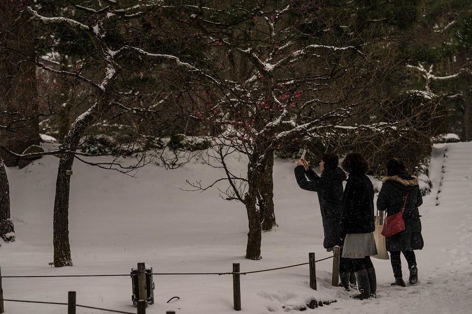 2017.01.15兼六園の朝景12