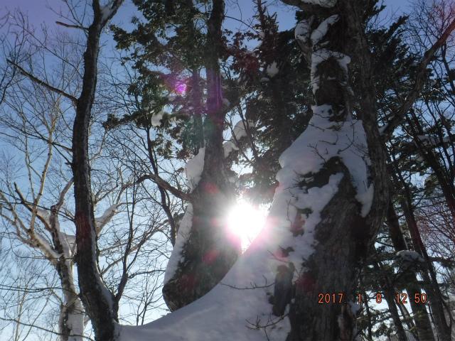 ブログ太陽