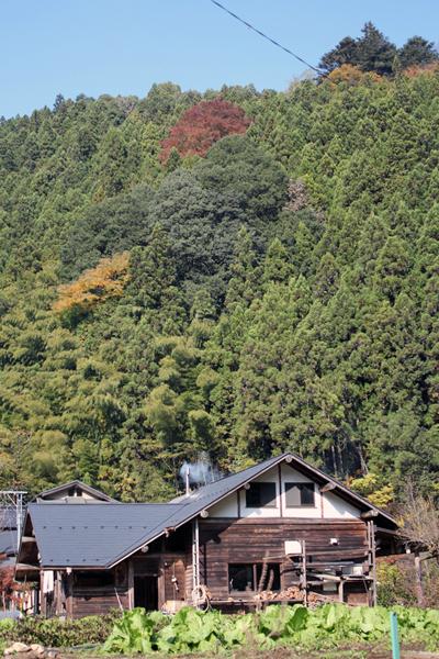 01 木の小屋