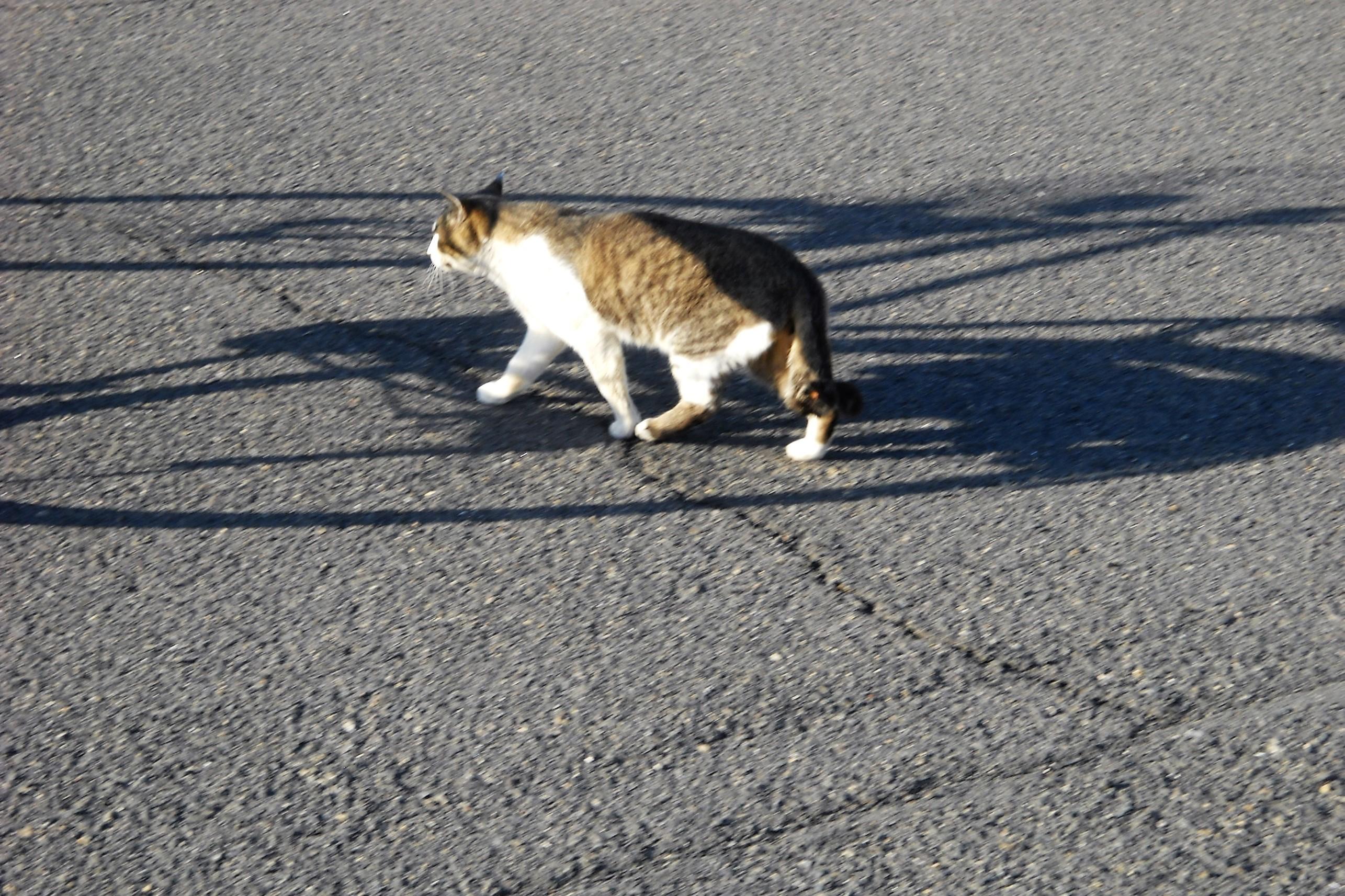 猫と自転車の影