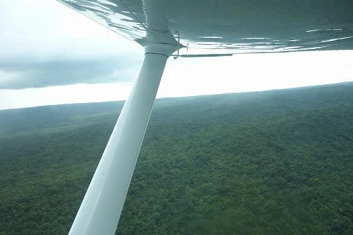 ジャングルを横切り