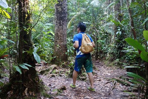 ジャングルを行く