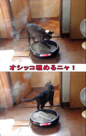 猫砂ぼこり