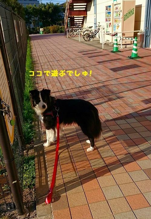 s-_20161210_183057.jpg
