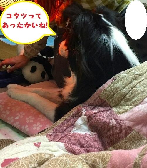 s-_20170121_190354.jpg