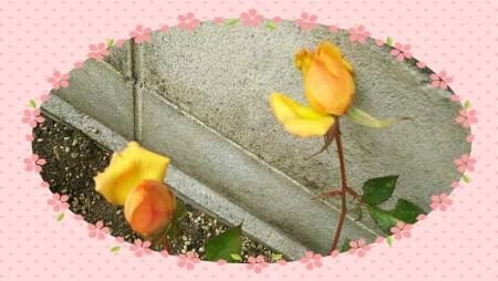 image1bbbbb.jpg