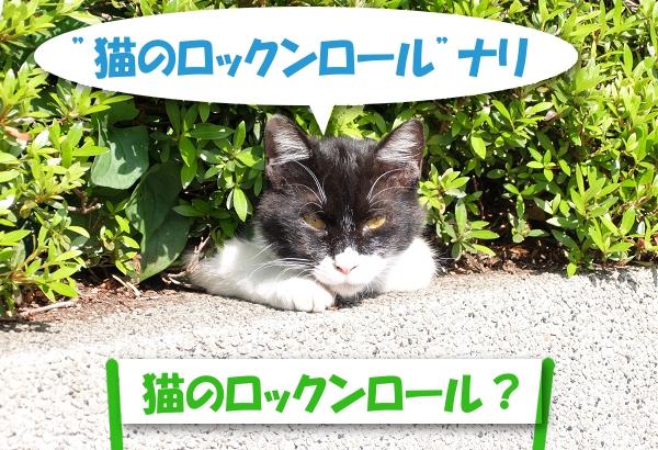 """""""猫のロックンロール""""ナリ 「猫のロックンロール?」"""