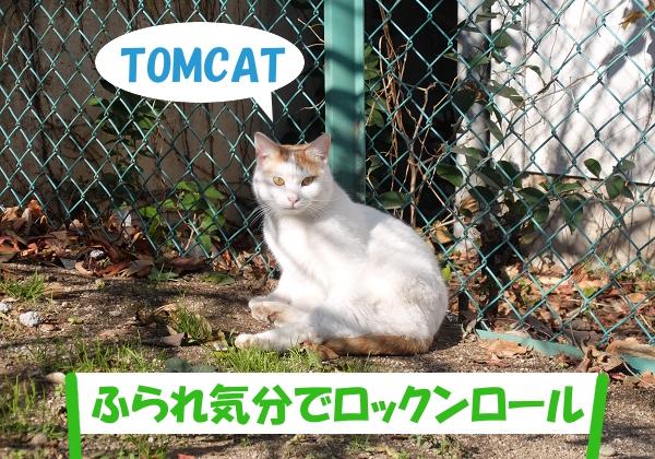 TOMCAT 「ふられ気分でロックンロール」