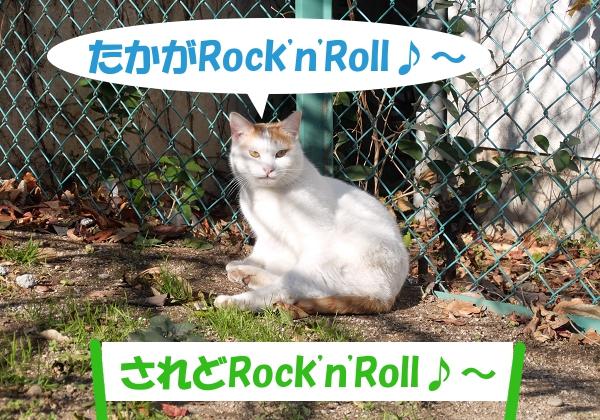 たかがRock'n'Roll♪~ 「されどRock'n'Roll♪~」