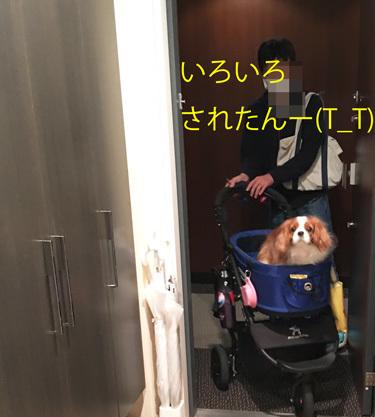 20161210 (4)