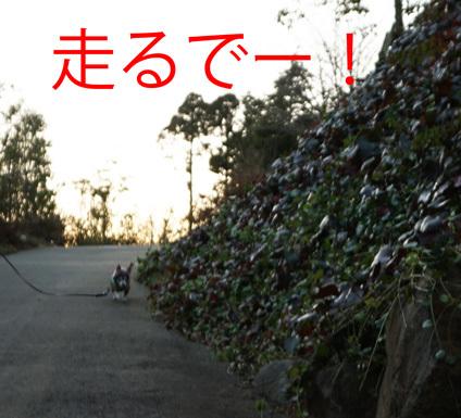20170104 (26)