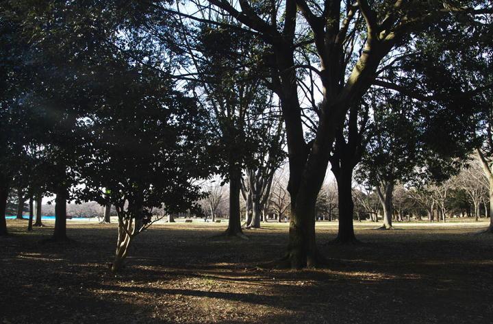 昭和記念公園-110