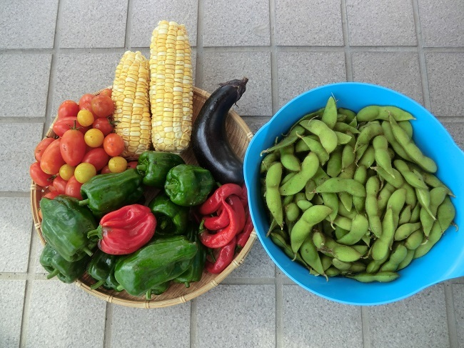 収穫916