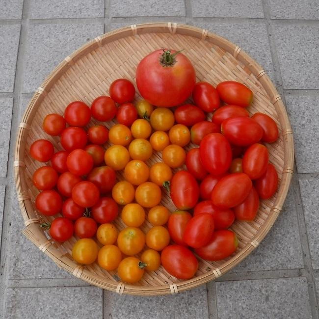 収穫951