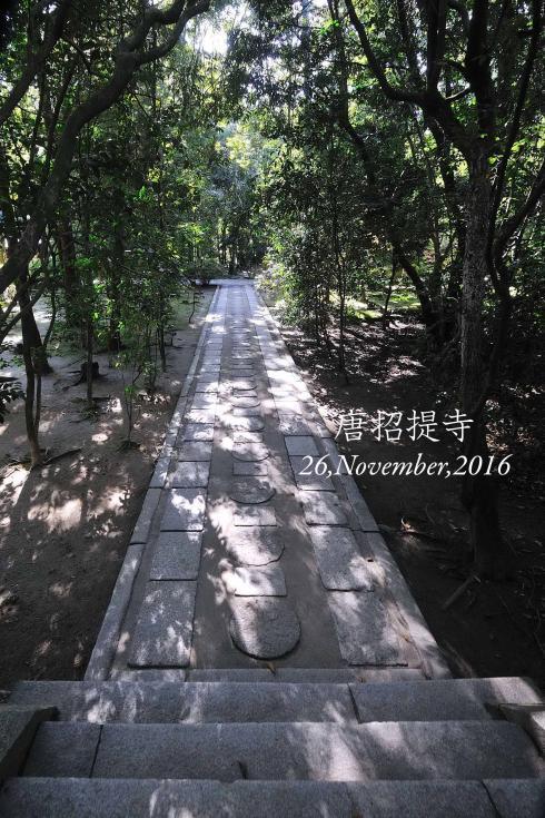 DSC_4529-L_convert_20161129135548.jpg