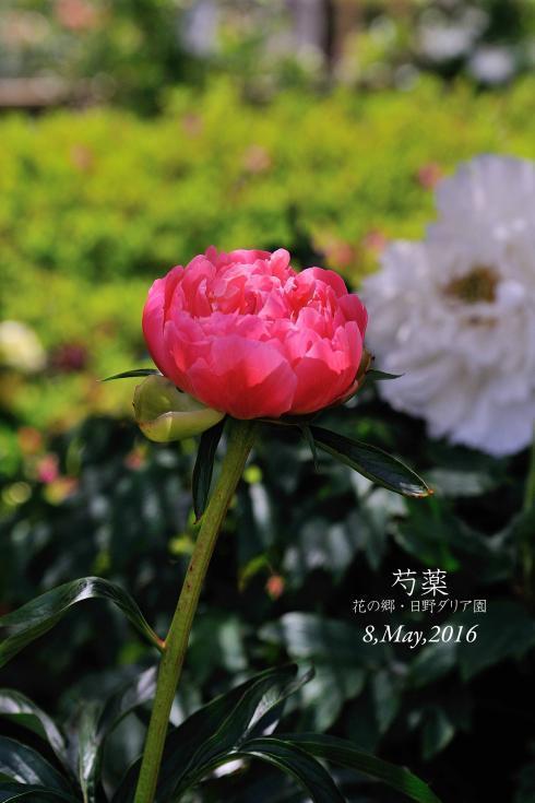 DSC_7242-L_convert_20161127194251.jpg