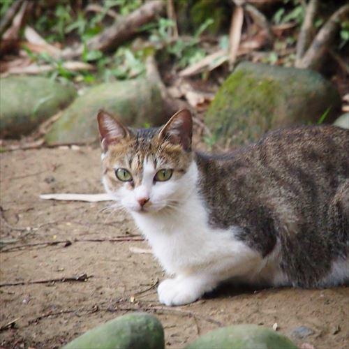 ゆうブログケロブログ台湾2016年11月 (50)