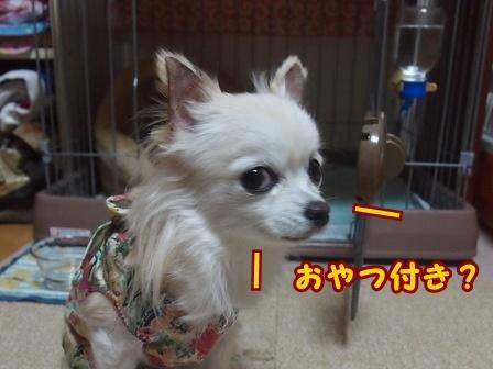 blog8598a.jpg