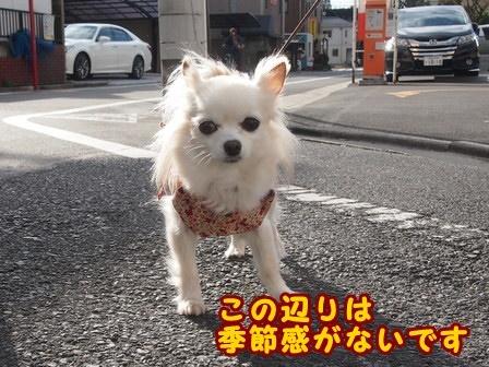 blog8683a.jpg
