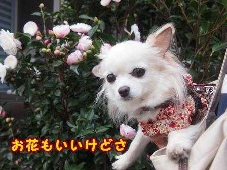 blog8694a.jpg