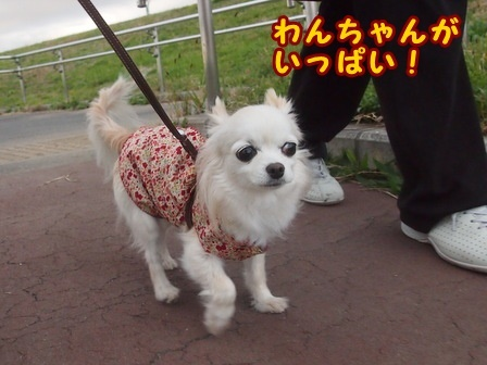 blog8707a.jpg