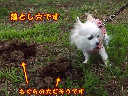 blog8713a.jpg