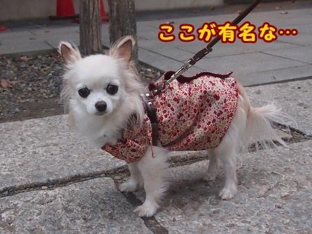 blog8719a.jpg