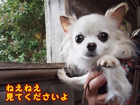 blog8753a.jpg