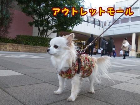 blog8781a.jpg