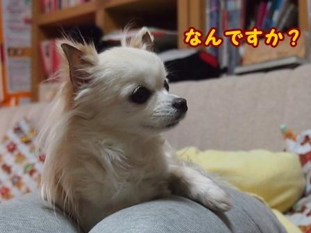 blog8820a.jpg