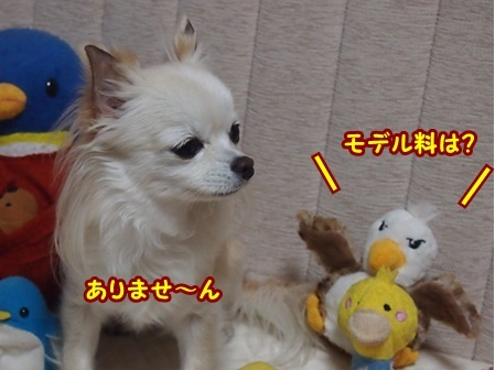 blog8857a.jpg