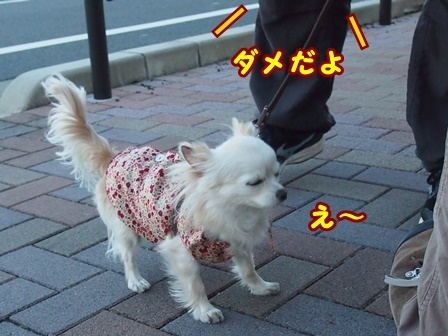 blog8917a.jpg