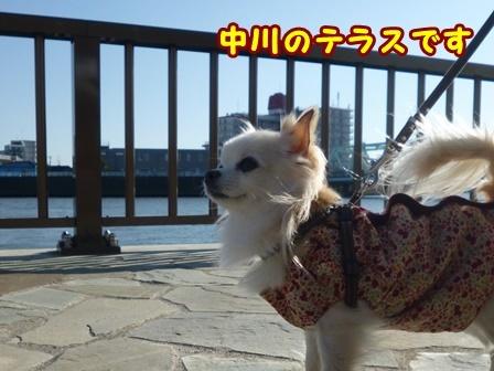 blog8970a.jpg
