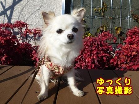 blog8971a.jpg