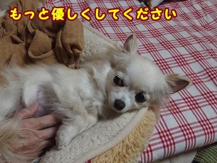 blog8987a.jpg