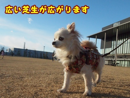 blog9006a.jpg