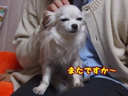 blog9081a.jpg