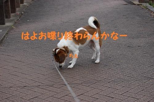IMG_2778.jpg