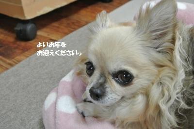 DSC_3875_convert_20161228095654.jpg