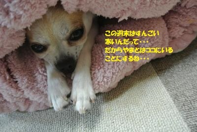 DSC_3963_convert_20170113094759.jpg