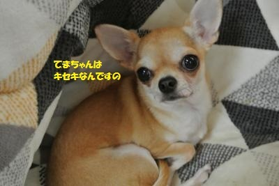 DSC_4090_convert_20170127094757.jpg